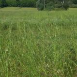 Pistoia terreno agricolo. Rif.P150